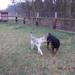 Hrátky na psím hřišti